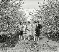 Spring Is Here - 1926