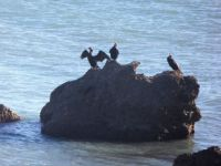 Spain. Vinaros/Alcanar. The only picture I could make of these birds!