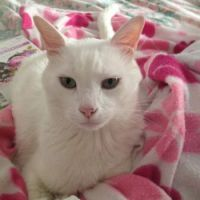Babi my tom cat