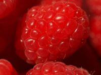 Theme Red- Raspberry
