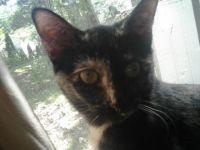 kitty 015