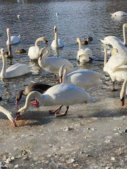 Feeding big birds