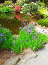 Irises at Shore Acres
