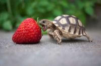 Cute Lil Turtle!