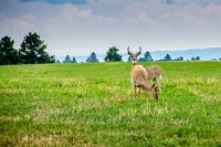 2014-08-31 Deer captured on the back roads of Wyoming