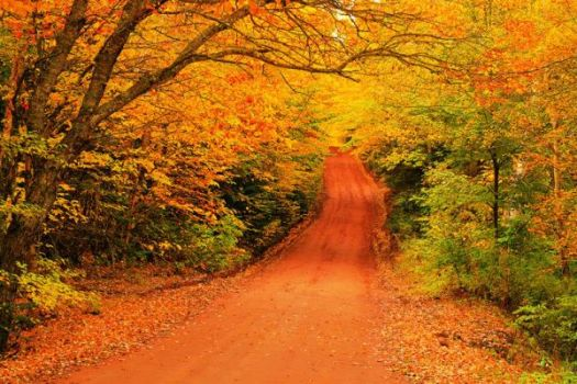 A Country Lane in Fall
