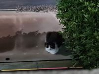 my guardian cat