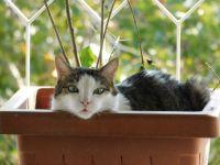 gatto Filippo