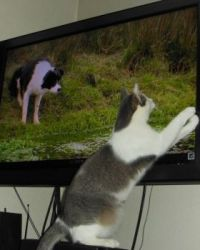 Smudge, getting into the tv action