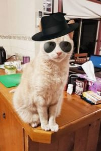Bert The Cool Cat