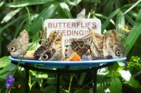 Butterfly Feeding Station