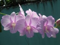 i love these orchids!