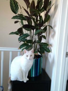 Lily and the tall plant (small)