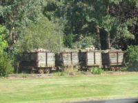 A train of bygone days