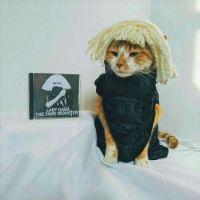 Cat Icon Game #44 - please identify!