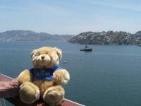 Teddy goes to San Francisco