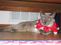 Honey in her Christmas outfit--see how happy she looks