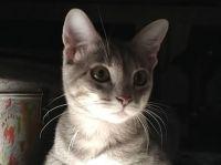 My Foster Kitten Ash