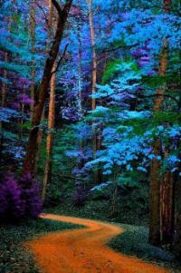 Blue trees path Great Smoky Mountains National Park, Tennessee  USA