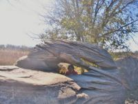 Mushroom Rocks State Park-A Head In The Rocks, Better Than Rocks In The Head b