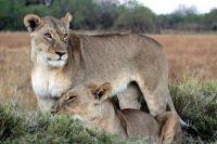 LION IMG_8897