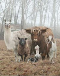 ~Odd Group of Animal Friends~