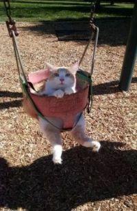 I be swingin'
