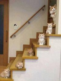 Kitten Steps