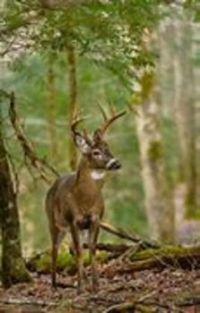 Buck... Buck Rogers #35