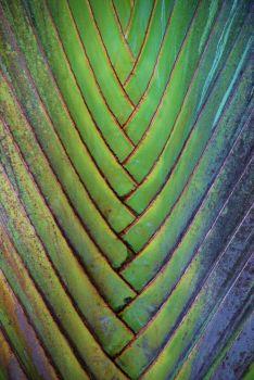 3  ~  Palm Leaf. (P/N)