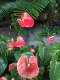73 Floral