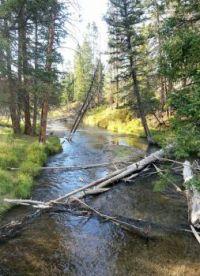 Lava Creek, looking north toward Undine Falls, Yellowstone National Park, 9/22/13