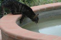 Gatto Assetato