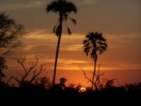 Sun Downer in Africa