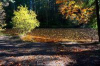 Lake (Fall) 2 - Small