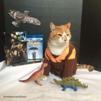 Cat Icon Game #79 - please identify