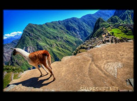 lhama above machu picchu (smaller), by shapeshift on flickr