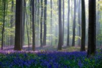 Wild Flowers in Woods