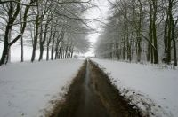 Tree-lined road - 21st Jan 2013
