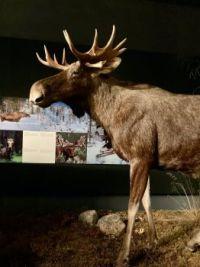 Museum Rovaniemi Finland