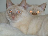 Gizmo & Kalea
