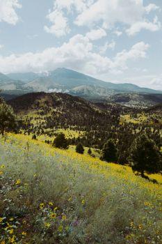 Fall Wildflowers, Flagstaff AZ