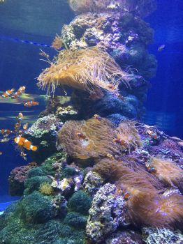 Tropical Aquarium Hamburg