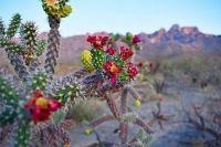 Oro Valley, Tucson,Arizona  5841