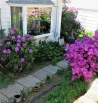 Azalea & Rhododendrons  ~  A peaceful place to relax