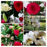 Flower Collage  (3)