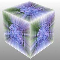 Hortenzie v kostce...  Hydrangea in a cube