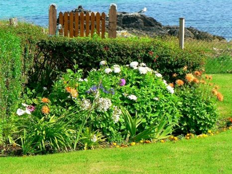 Flowerbed in a garden along the foreshore, Iona, Scotland.  Photo by Rich Tea
