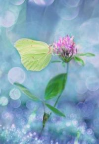 klee four leaf clover plant nature medicinal plant