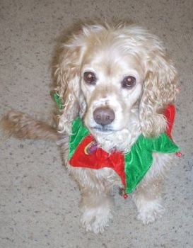 Daisy, the Elf Dog